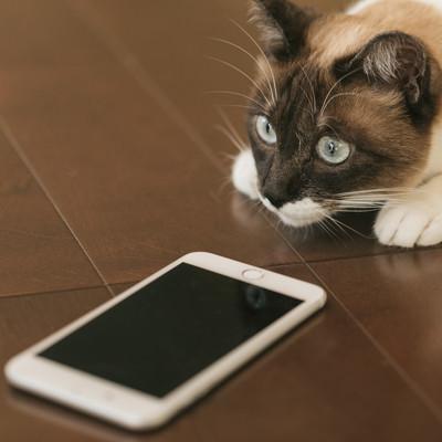 「スマホの指紋認証に失敗する猫」の写真素材
