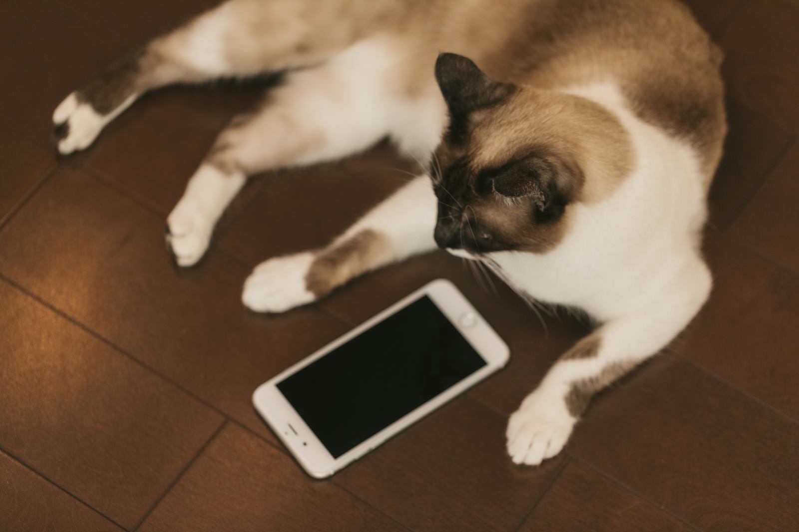 「既読スルー猫既読スルー猫」のフリー写真素材を拡大