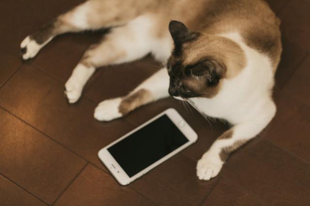 既読スルー猫の写真