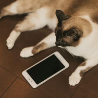 「既読スルー猫」の写真素材