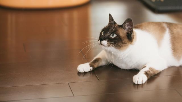 頭上の獲物を追う猫の写真