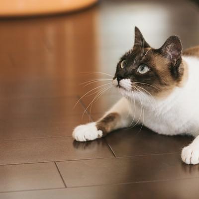 「頭上の獲物を追う猫」の写真素材