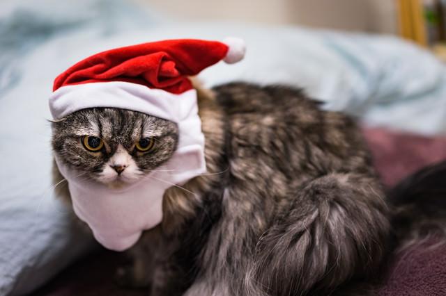 クリぼっち(猫)の写真