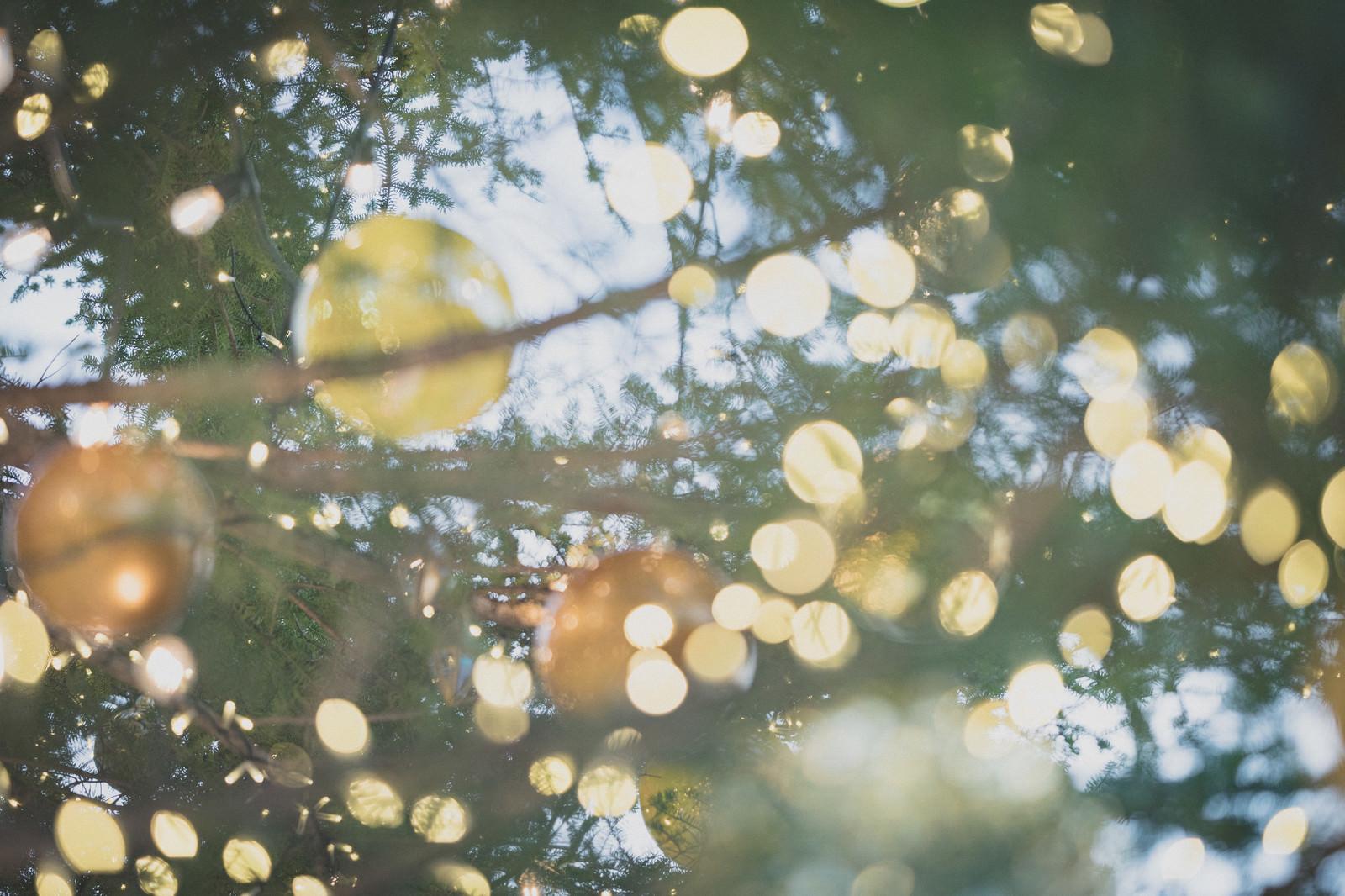 「樹木とイルミネーション」の写真