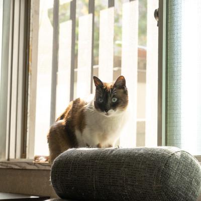 窓際が落ち着くニャンの写真