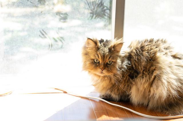 日向ぼっこが気持ちよすぎるネコ氏の写真