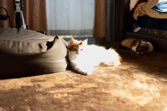 直射日光にゃん(白飛び)の写真