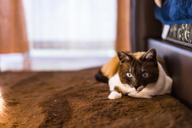 フリーズする猫の写真