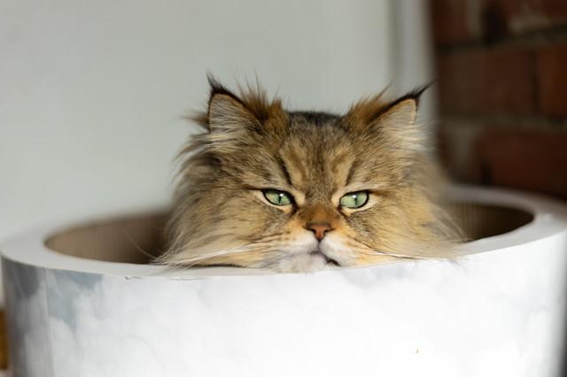 土管でワープ猫の写真