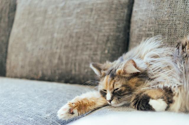 休み明け会社行きたくない猫の写真