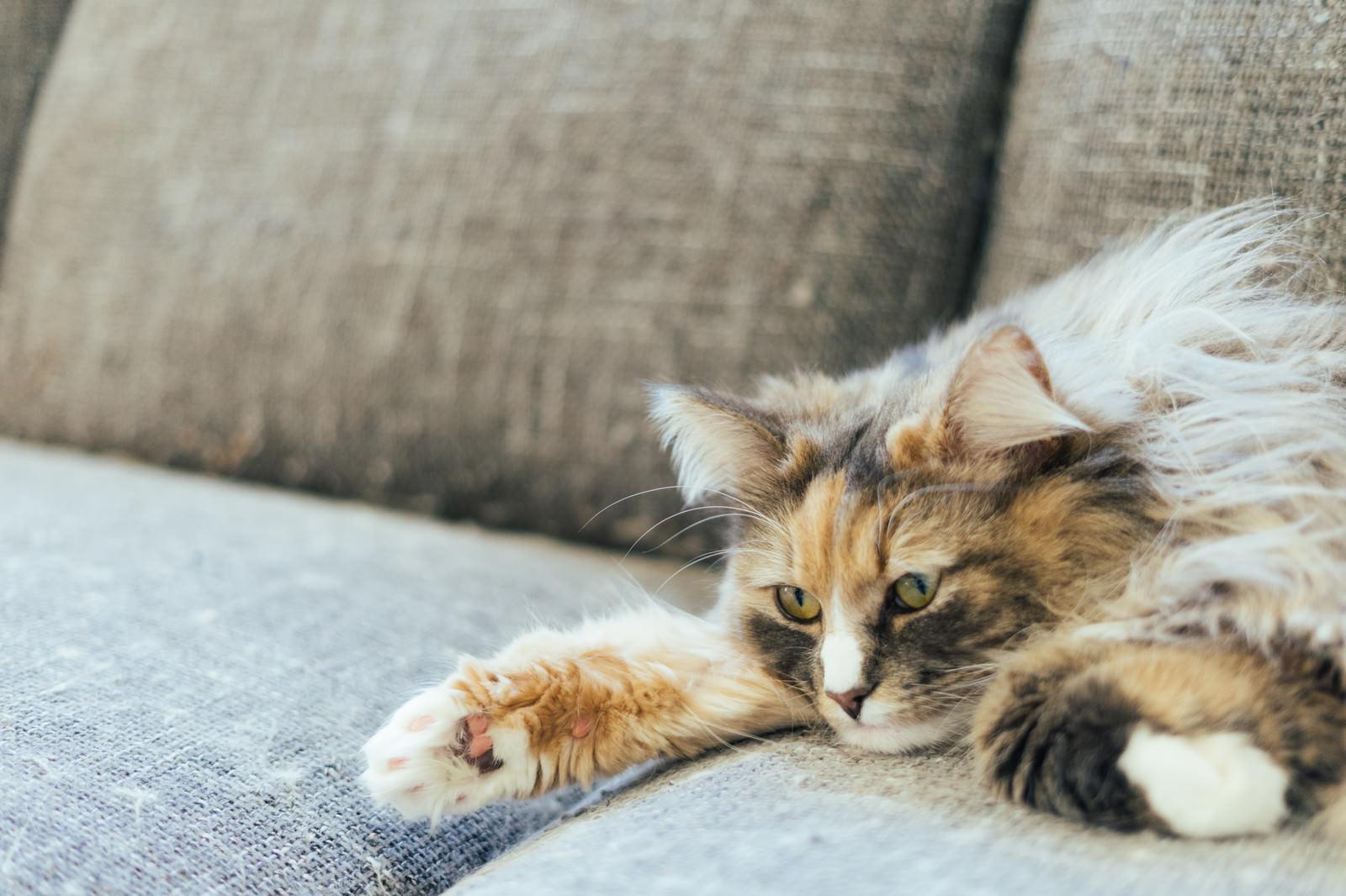 「ごろ猫」の写真