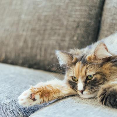 ごろ猫の写真