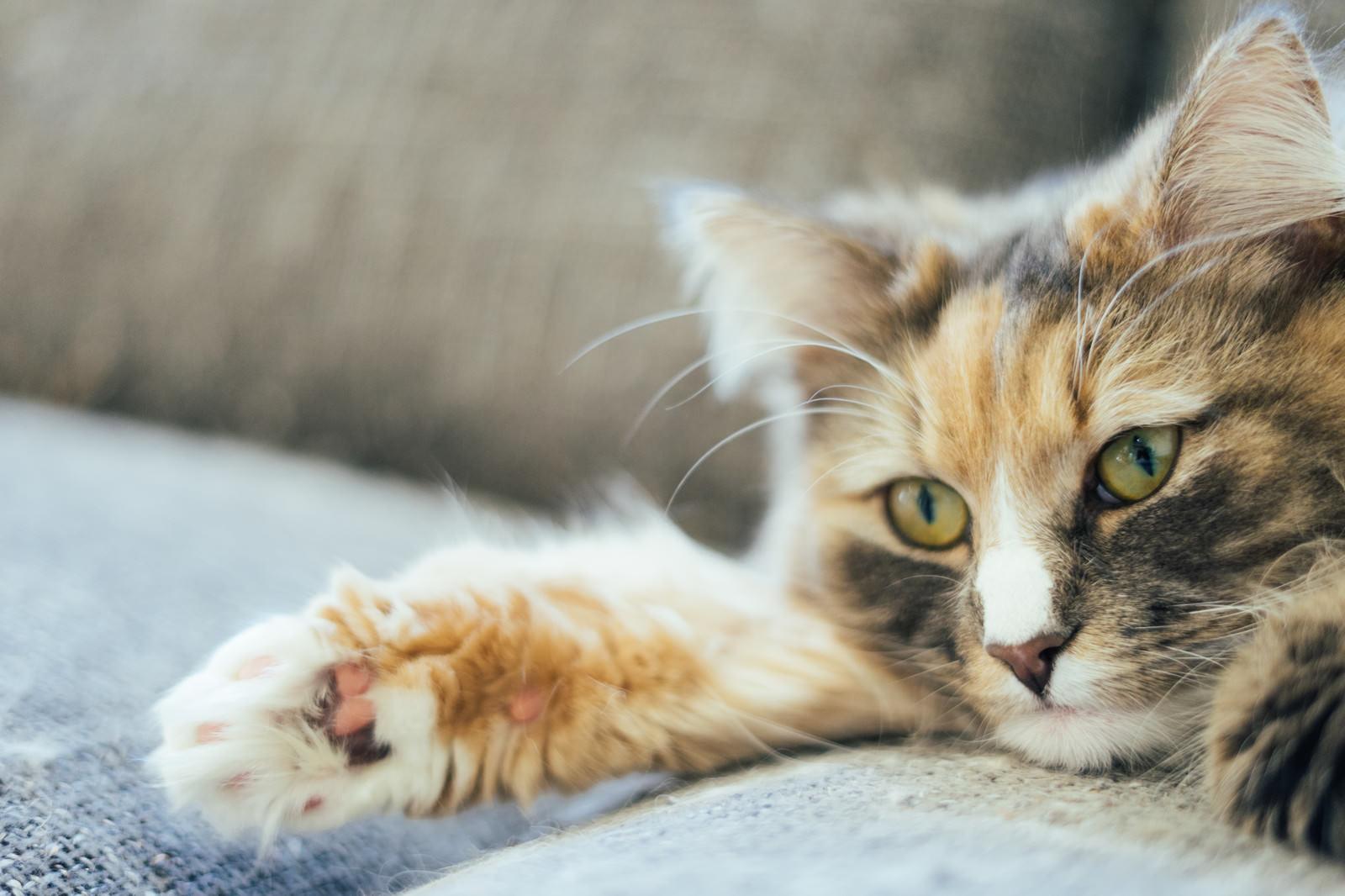 「肉球猫」の写真