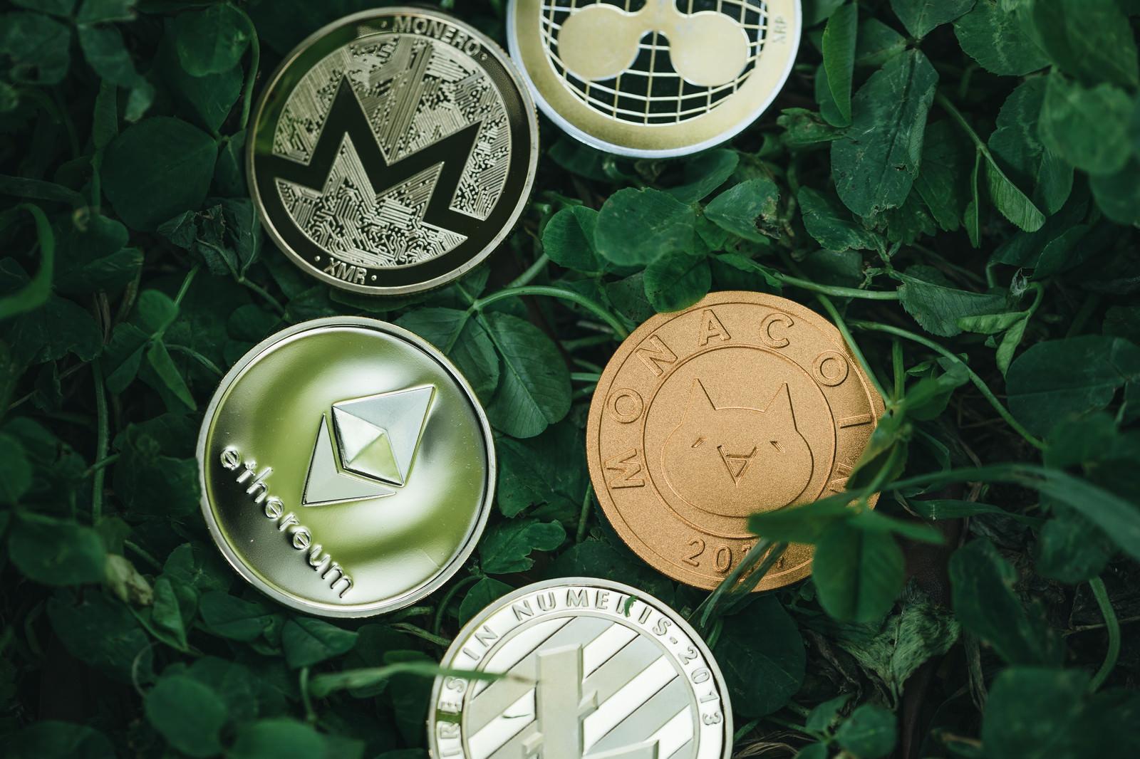 「草むらに身を潜めるアルトコインたち」の写真