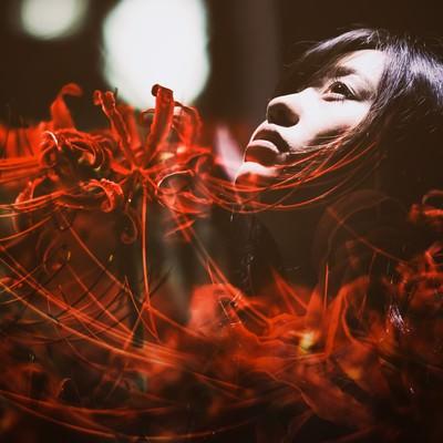 「悲顔花(ヒガンバナ)」の写真素材