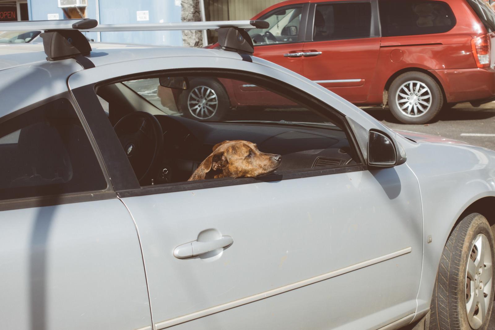 「買い物中の飼い主を待つ犬」の写真
