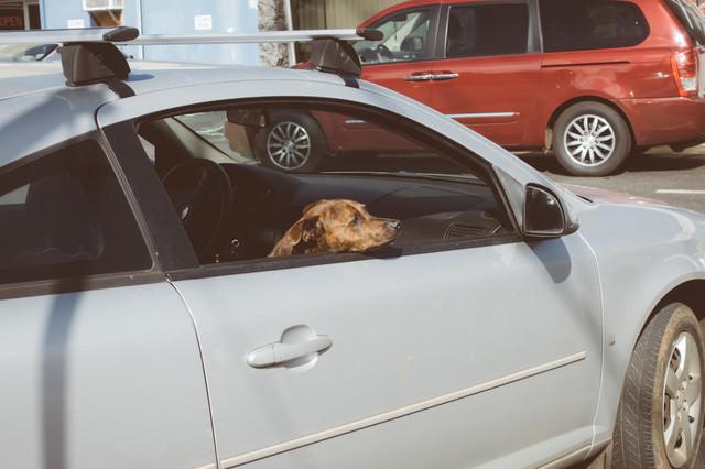 買い物中の飼い主を待つ犬の写真