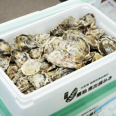 ぎっしり詰め込まれた生牡蠣18キロの写真