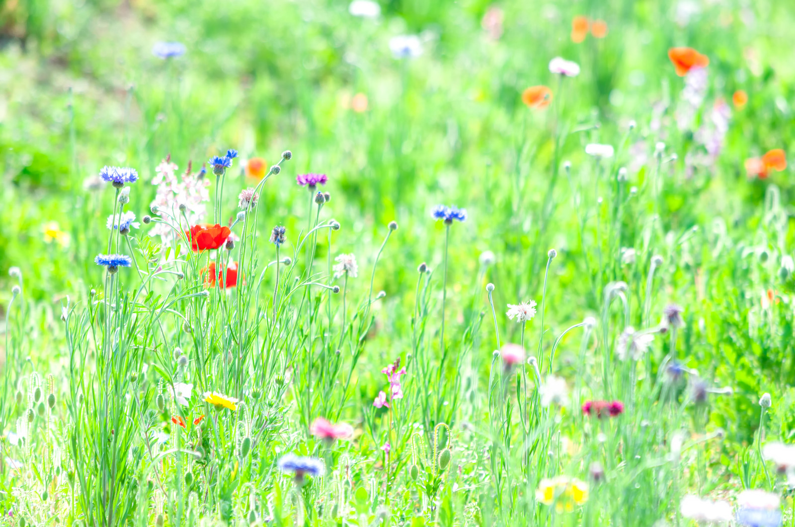 「春の草花」の写真