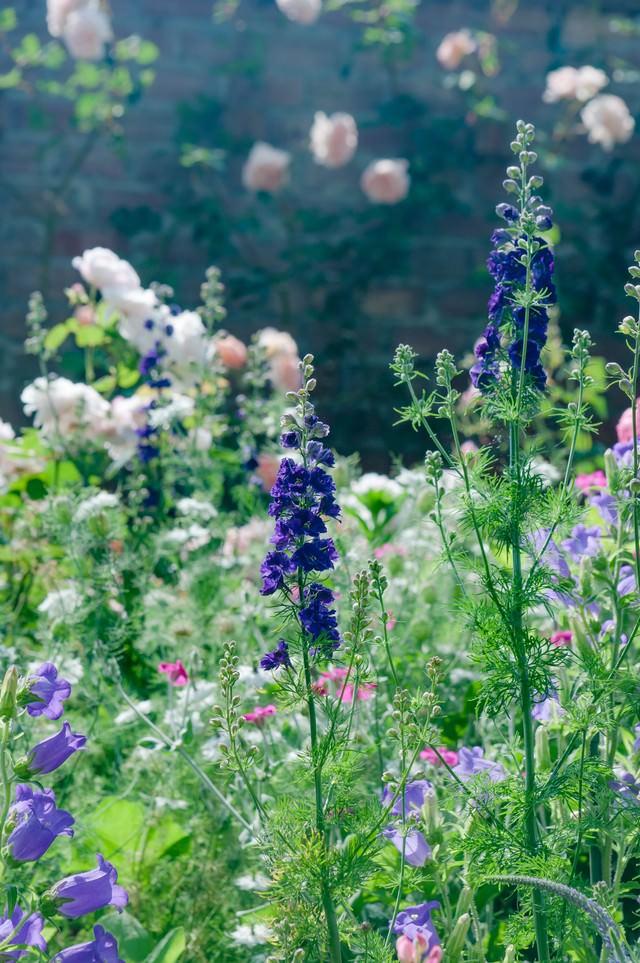 静かな朝の庭の写真