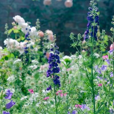 「静かな朝の庭」の写真素材