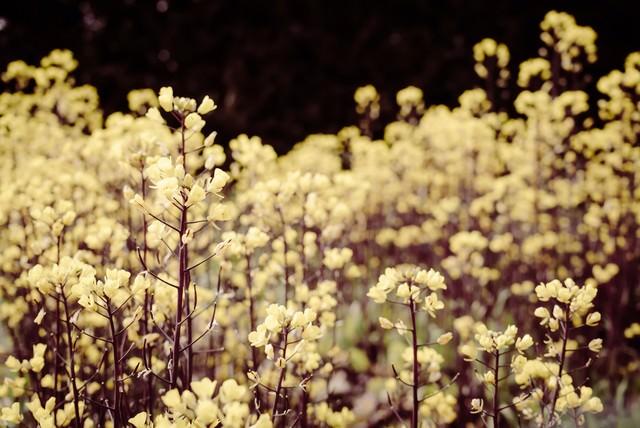 いつかの記憶にある花畑の写真