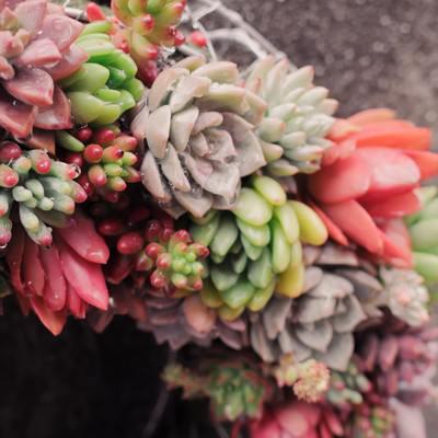 色とりどりの多肉植物で作られたリースの写真