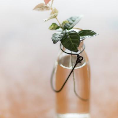 ハツユキガズラと瓶の写真