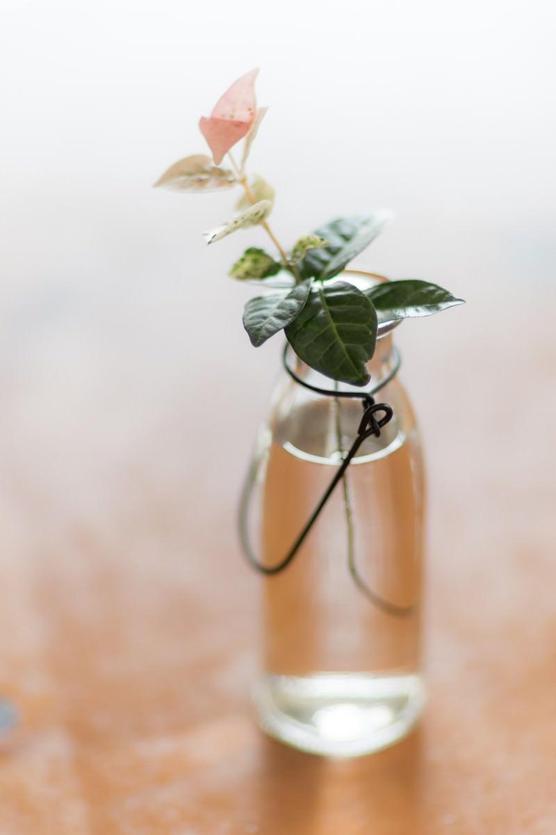 「ハツユキガズラと瓶」の写真