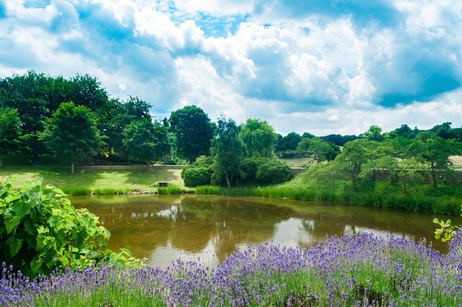 「緑あふれるのどかな公園」の写真