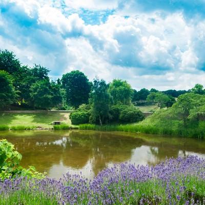 緑あふれるのどかな公園の写真