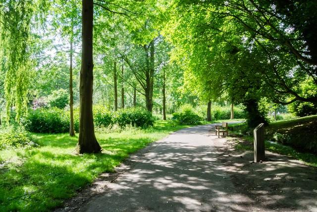 大きな木々の茂る公園の写真