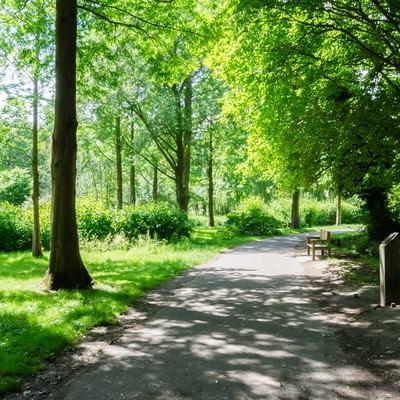 「大きな木々の茂る公園」の写真素材