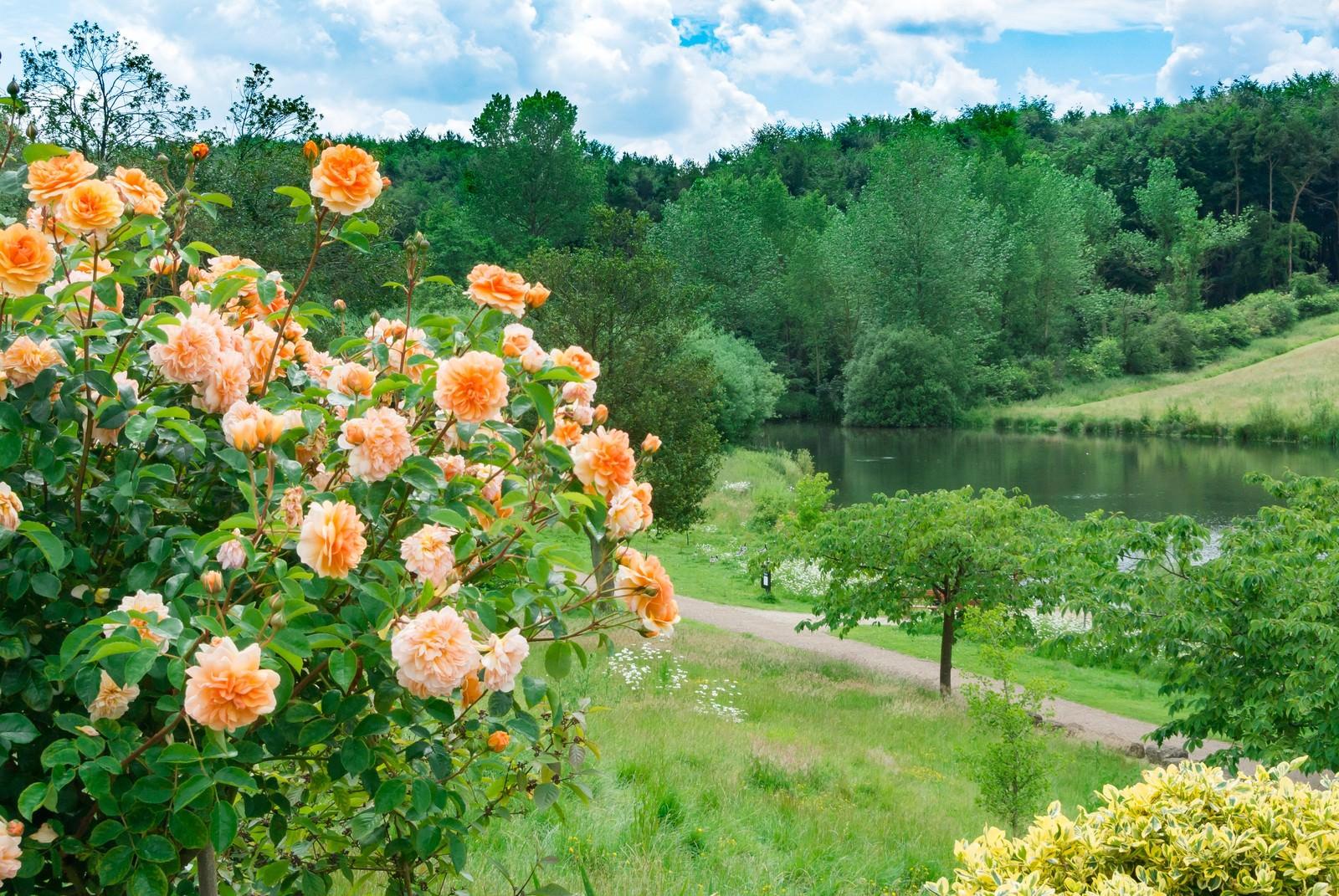 「水辺の公園と花」の写真