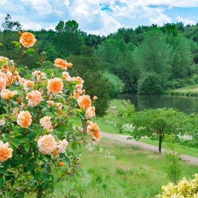 「水辺の公園と花」の写真素材