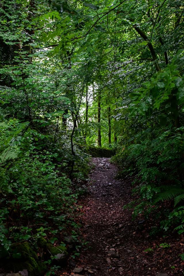 うっそうと茂る林の写真