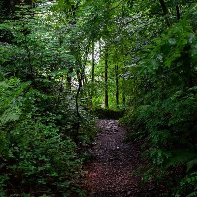 「うっそうと茂る林」の写真素材
