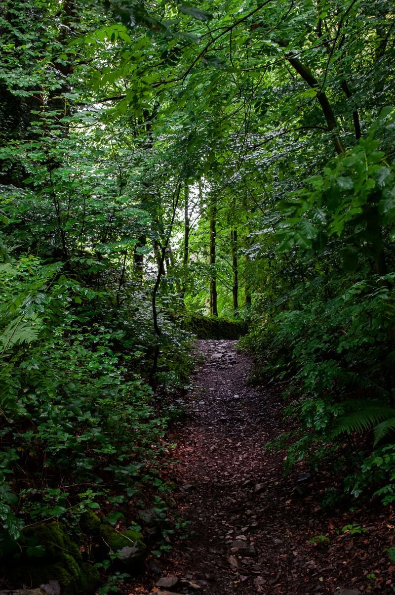 「うっそうと茂る林」の写真