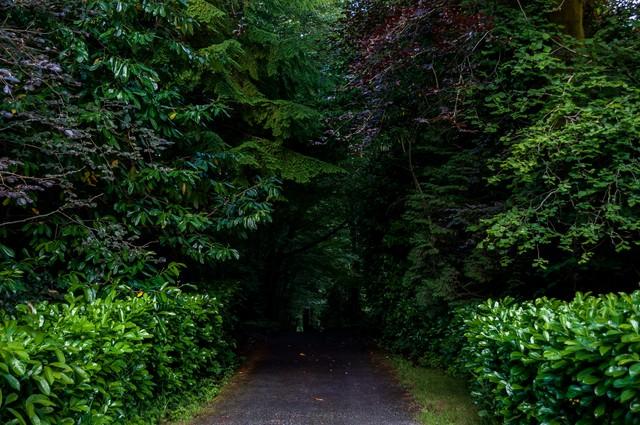 森の奥へと続くの写真