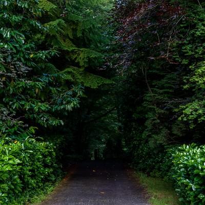 「森の奥へと続く」の写真素材