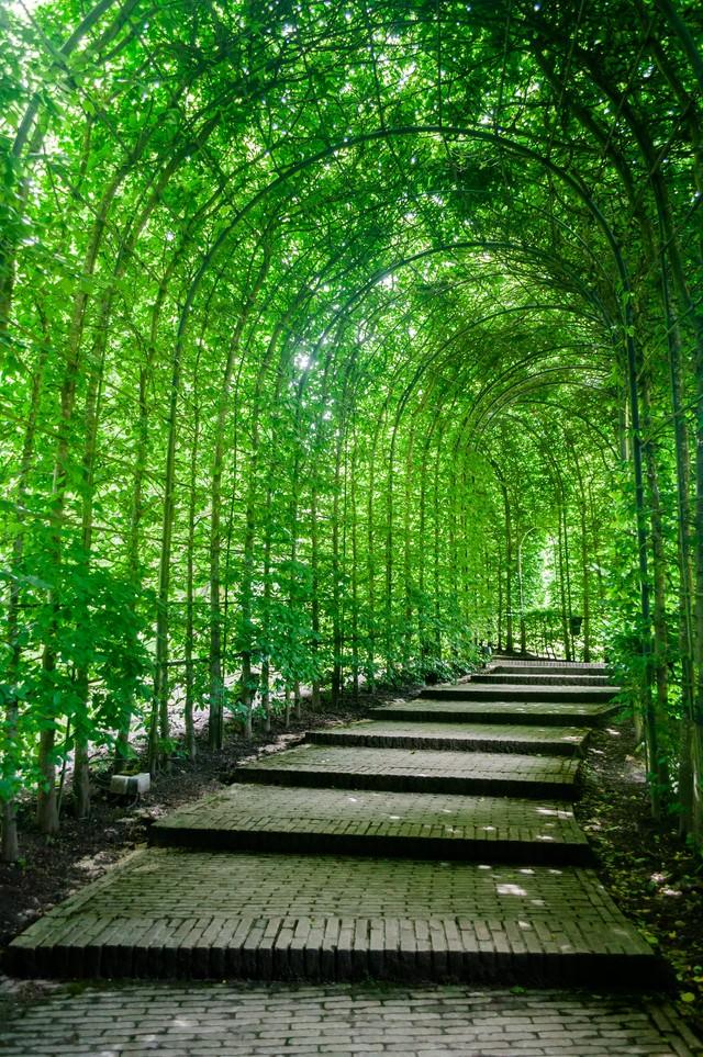 緑のトンネルの写真