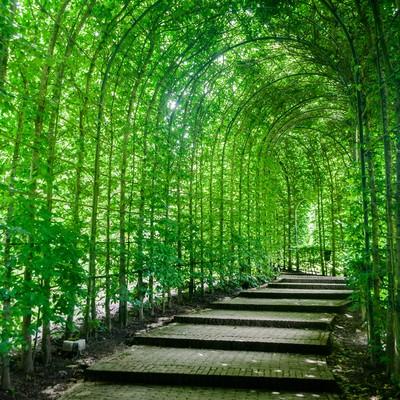 「緑のトンネル」の写真素材