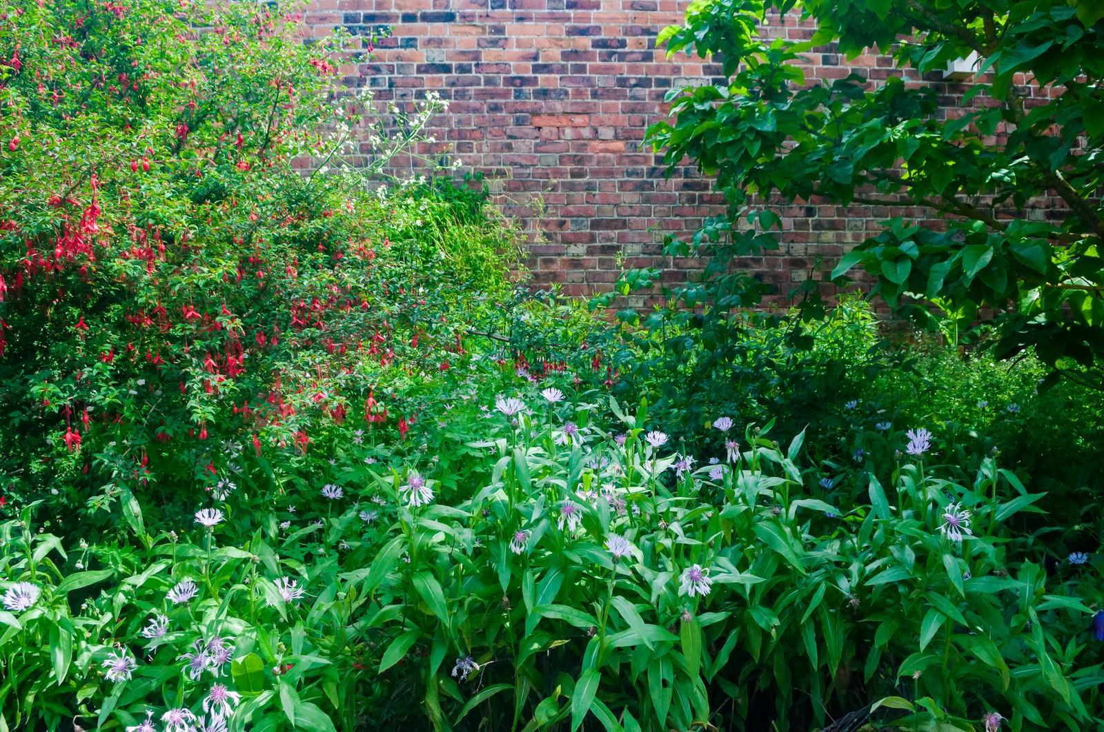 「初夏の庭」の写真