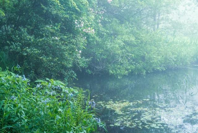 朝霧の写真