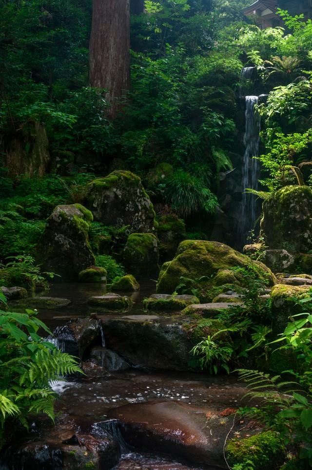 みどりの森の写真