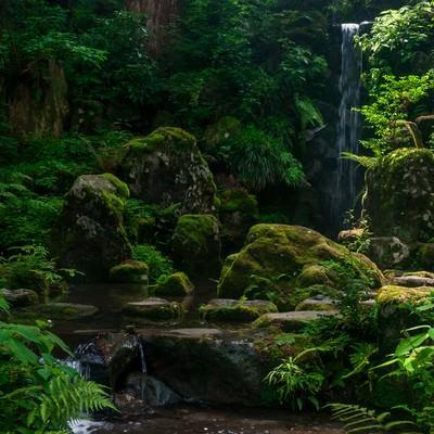 「みどりの森」の写真素材