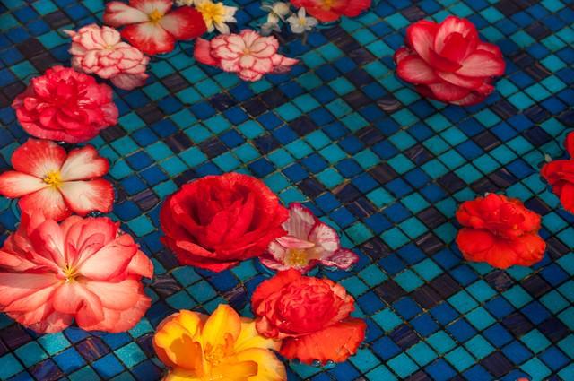 水に浮かぶ花(ベゴニア)の写真