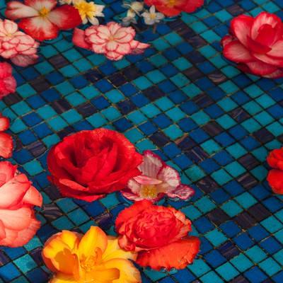 「水に浮かぶ花(ベゴニア)」の写真素材