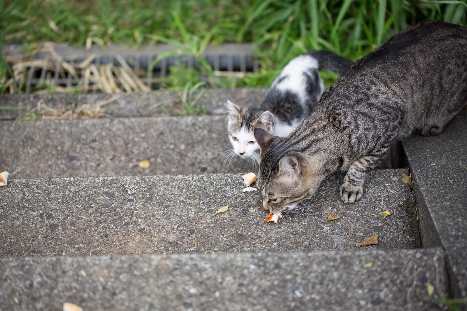 「パンくずを与えられた野良猫二匹」の写真