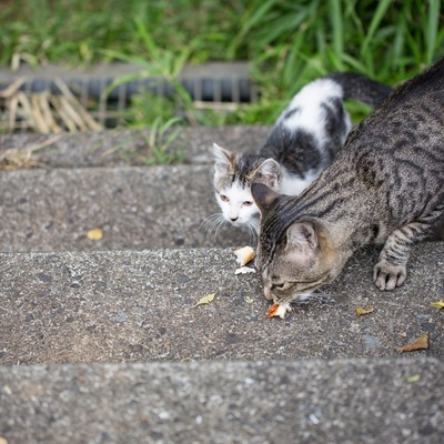 「パンくずを与えられた野良猫二匹」の写真素材